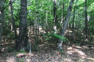 Brown Road Homesite, Hunting-Recreation and Timber Tract in Tuscaloosa, AL (16 of 39)