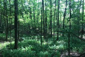 Brown Road Homesite, Hunting-Recreation and Timber Tract in Tuscaloosa, AL (28 of 39)