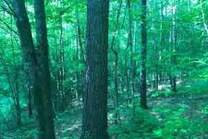 Brown Road Homesite, Hunting-Recreation and Timber Tract in Tuscaloosa, AL (18 of 39)