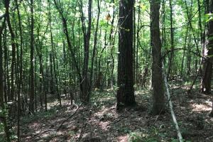 Brown Road Homesite, Hunting-Recreation and Timber Tract in Tuscaloosa, AL (29 of 39)