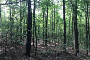 Brown Road Homesite, Hunting-Recreation and Timber Tract in Tuscaloosa, AL (19 of 39)