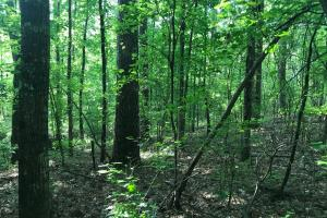 Brown Road Homesite, Hunting-Recreation and Timber Tract in Tuscaloosa, AL (22 of 39)