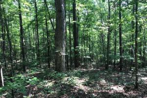 Brown Road Homesite, Hunting-Recreation and Timber Tract in Tuscaloosa, AL (32 of 39)