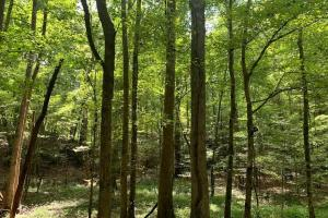 Beautiful Bentonia Hardwood Property - Yazoo County MS