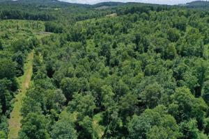 Ashe County Hunting and Timber Tract - Ashe County, NC