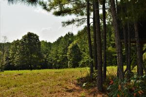 Crisstown Lake Recreation and Development Tract in Tuscaloosa, AL (4 of 21)