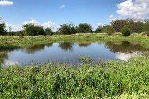 11.75 acres Pond, Large Trees, Great Home Site near Mabank - Kaufman County TX