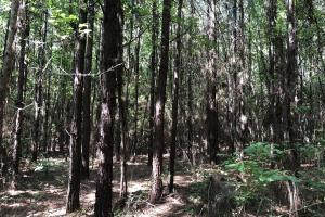 Belleville Hunting and Timberland Investment in Conecuh, AL (5 of 5)