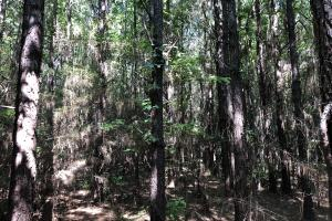 Belleville Hunting and Timberland Investment in Conecuh, AL (3 of 5)