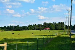 Winfield Cattle Farm and Homestead - Marion County AL