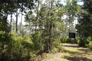 Madison County Hunting and Timber Investment - Madison County FL