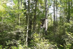 Ladder stand with camo netting hidden off food plot and shooting lane.  (4 of 14)