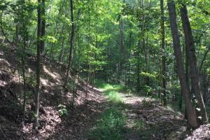 Timberland Investment, Hunting and Recreation Property - Roane County, TN