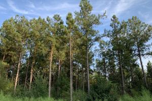 Kimbrough Highway 5 Cord Credit Timber & Hunting Investment in Wilcox, AL (1 of 7)