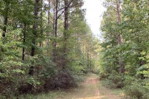 Pine Hill Above Average Timber & Hunting Investment in Wilcox, AL (23 of 27)