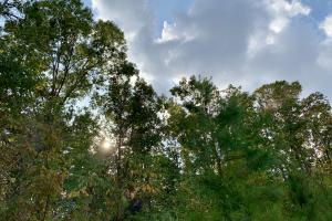 Pine Hill Above Average Timber & Hunting Investment in Wilcox, AL (25 of 27)