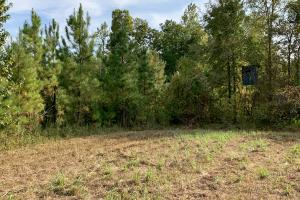 Pine Hill Above Average Timber & Hunting Investment in Wilcox, AL (4 of 27)