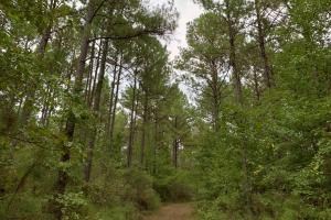 Pine Hill Above Average Timber & Hunting Investment in Wilcox, AL (16 of 27)