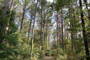 Pine Hill Above Average Timber & Hunting Investment in Wilcox, AL (3 of 27)