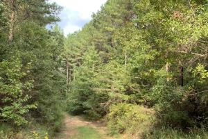 Pine Hill Above Average Timber & Hunting Investment in Wilcox, AL (26 of 27)