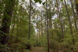Pine Hill Above Average Timber & Hunting Investment in Wilcox, AL (15 of 27)