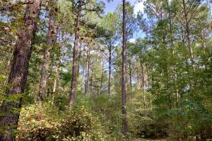 Pine Hill Above Average Timber & Hunting Investment in Wilcox, AL (7 of 27)