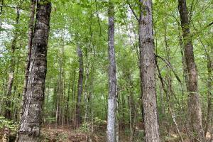 Pine Hill Above Average Timber & Hunting Investment in Wilcox, AL (2 of 27)