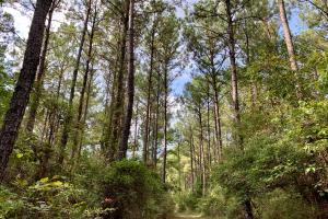 Pine Hill Above Average Timber & Hunting Investment in Wilcox, AL (12 of 27)