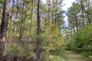 Pine Hill Above Average Timber & Hunting Investment in Wilcox, AL (18 of 27)