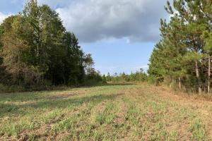 Pine Hill Above Average Timber & Hunting Investment in Wilcox, AL (19 of 27)