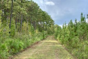 Pine Hill Above Average Timber & Hunting Investment in Wilcox, AL (8 of 27)