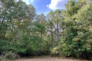 Pine Hill Above Average Timber & Hunting Investment in Wilcox, AL (20 of 27)
