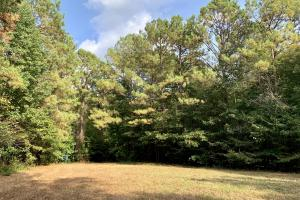 Pine Hill Above Average Timber & Hunting Investment in Wilcox, AL (17 of 27)
