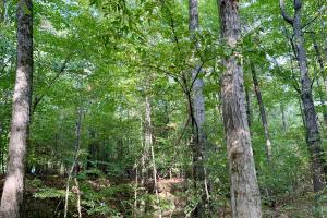Pine Hill Above Average Timber & Hunting Investment in Wilcox, AL (14 of 27)