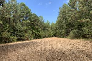 Pine Hill Above Average Timber & Hunting Investment in Wilcox, AL (27 of 27)