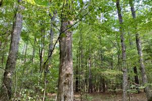 Pine Hill Above Average Timber & Hunting Investment in Wilcox, AL (9 of 27)