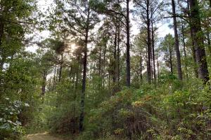 Pine Hill Above Average Timber & Hunting Investment in Wilcox, AL (21 of 27)