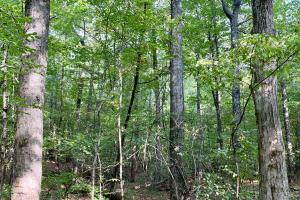 Pine Hill Above Average Timber & Hunting Investment in Wilcox, AL (11 of 27)