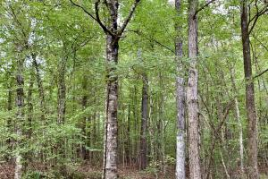 Pine Hill Above Average Timber & Hunting Investment in Wilcox, AL (5 of 27)
