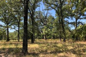 33 +/- acres, Wooded, Open Areas. Near Cedar Creek Lake. - Henderson County TX