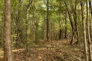 Mulberry Creek Hunting and Timber Tract in Autauga, AL (31 of 39)