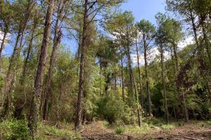 Mulberry Creek Hunting and Timber Tract in Autauga, AL (33 of 39)