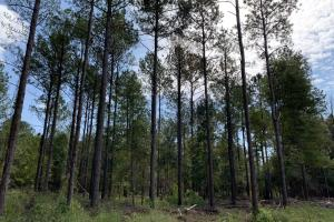 Mulberry Creek Hunting and Timber Tract in Autauga, AL (25 of 39)