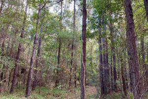 Mulberry Creek Hunting and Timber Tract in Autauga, AL (34 of 39)