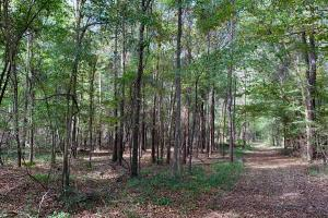 Mulberry Creek Hunting and Timber Tract in Autauga, AL (21 of 39)