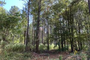Mulberry Creek Hunting and Timber Tract in Autauga, AL (26 of 39)