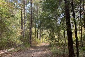 Mulberry Creek Hunting and Timber Tract in Autauga, AL (27 of 39)