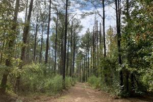 Mulberry Creek Hunting and Timber Tract in Autauga, AL (28 of 39)