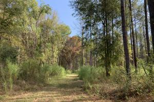 Mulberry Creek Hunting and Timber Tract in Autauga, AL (20 of 39)