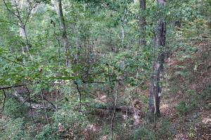 Mulberry Creek Hunting and Timber Tract in Autauga, AL (39 of 39)